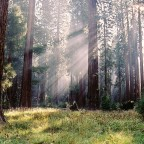 National Park Spotlight: Sequoia & Kings Canyon