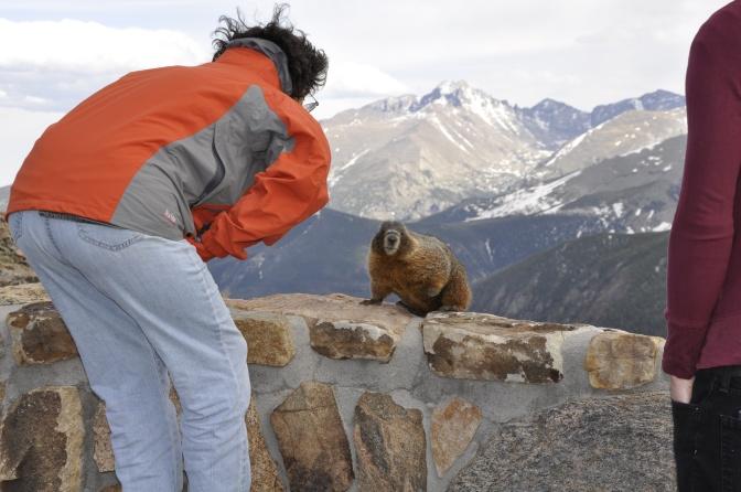 Hey, Mr. Marmot!