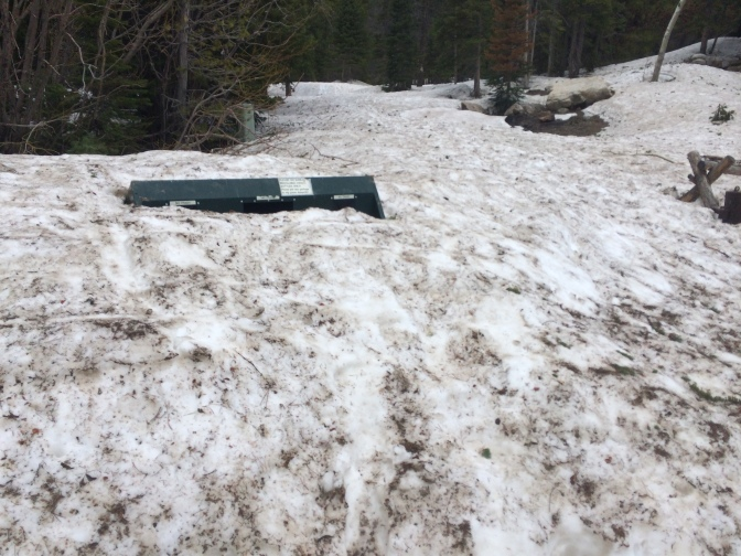 The snow covers the signs and garbage cans at Bear Lake recreation area.