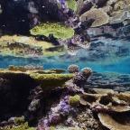 Ocean Acidification Update