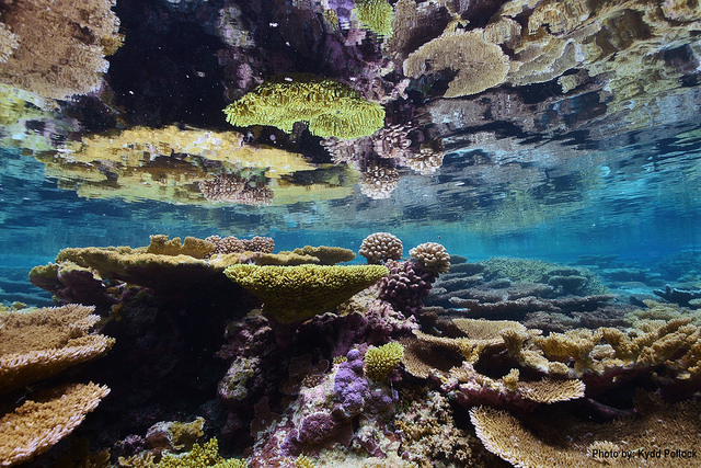 Palmyra Atoll National Wildlife Refuge