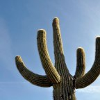 Outdoor Exploration: Southern Arizona