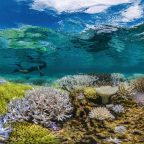 """""""Coral reefs are a casualty of climate change"""" — reflections from Chasing Coral"""