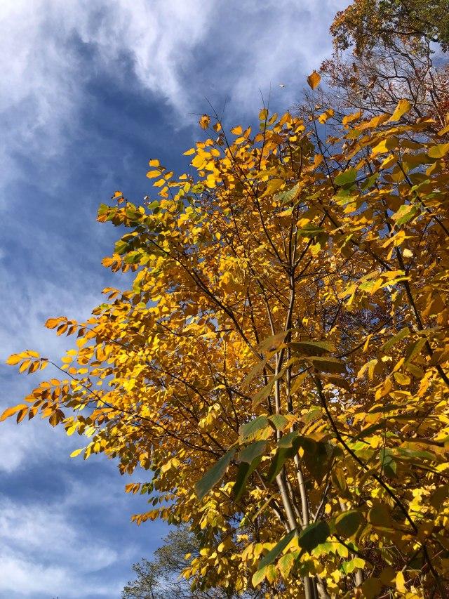 fall_at_reeves_reed